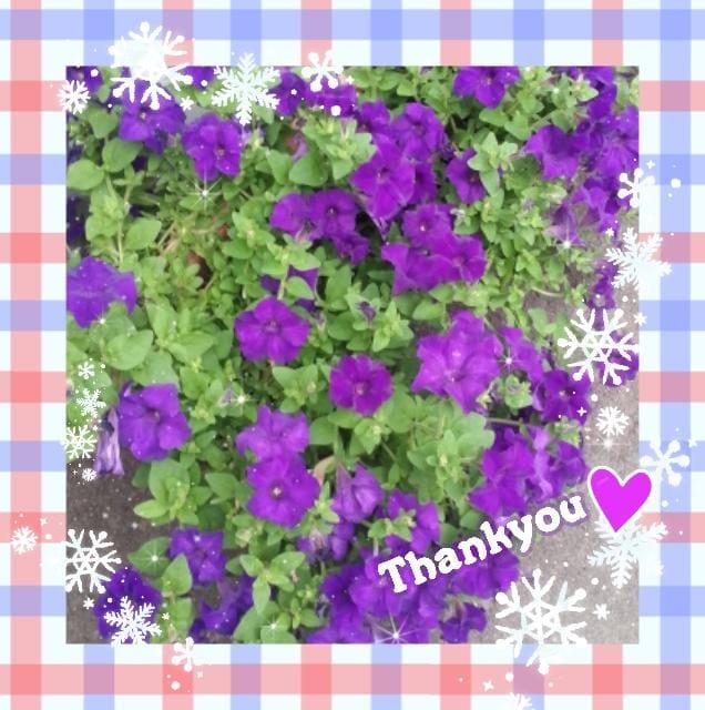 「ありがとうございます☆」11/21日(水) 16:18 | 雪奈の写メ・風俗動画