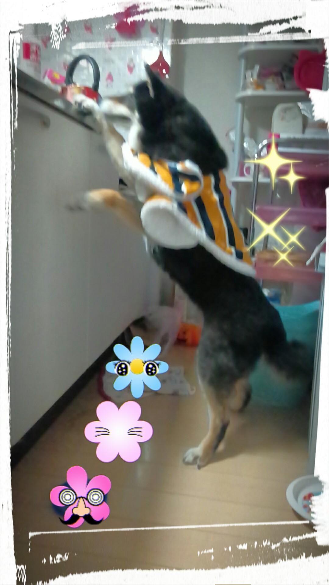 「''*♪  愛犬ちゃん」11/22(木) 15:06   ささの写メ・風俗動画