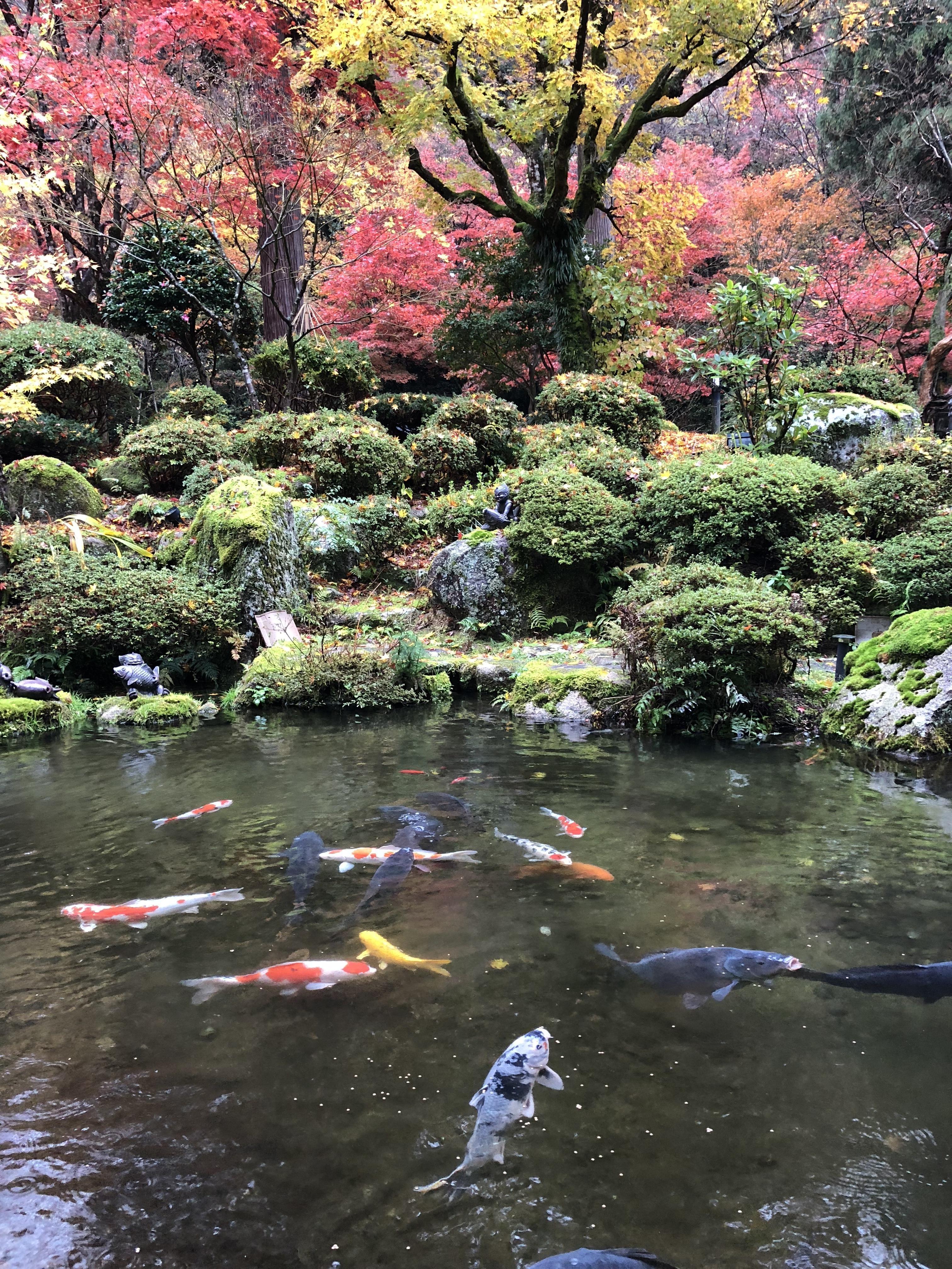 「雨の紅葉」11/23(金) 15:31   桃子(ももこ)の写メ・風俗動画