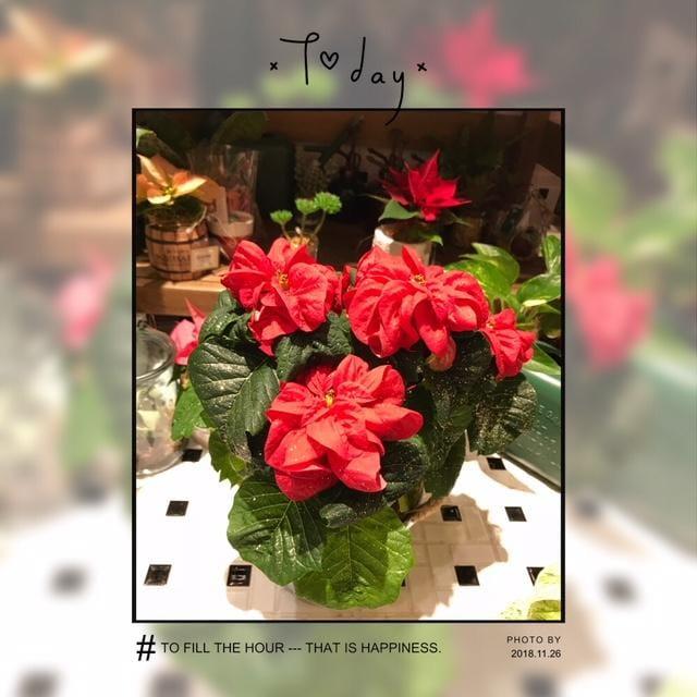 「紅い……」11/27(火) 01:11 | あんなの写メ・風俗動画