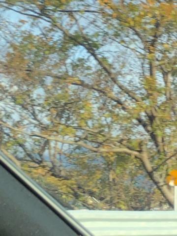 「おはよ~」12/01(土) 10:18   まほの写メ・風俗動画