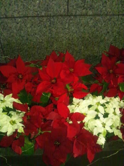 「クリスマスカラー♪」12/07(金) 21:36 | 涼子の写メ・風俗動画