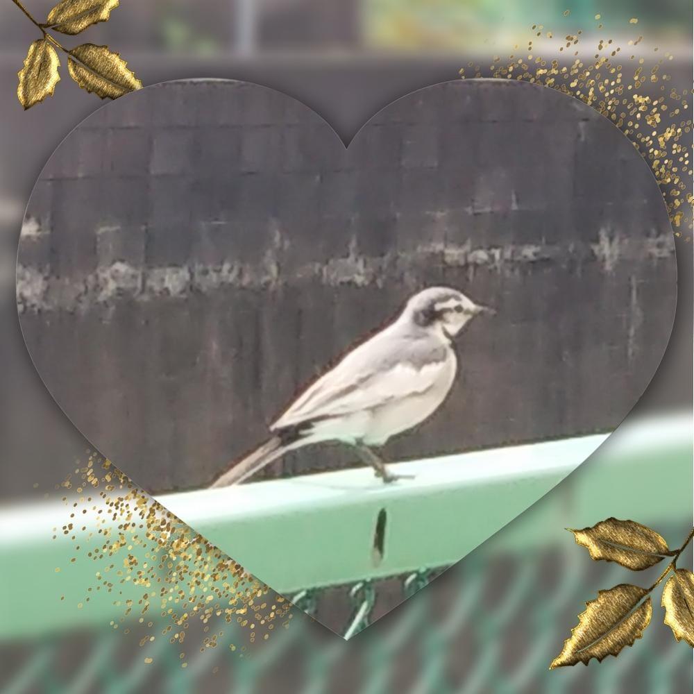 みずき「小鳥ちゃん」12/09(日) 11:19 | みずきの写メ・風俗動画