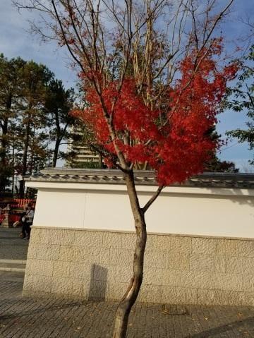 「遅くなりました」12/09(日) 17:24   高島はるの写メ・風俗動画