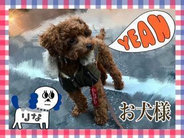 「お犬様だもの。」12/10日(月) 07:20 | 相澤りなの写メ・風俗動画