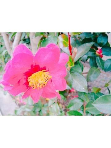 「椿」12/10日(月) 12:08 | さくらの写メ・風俗動画