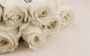 「今日の花??」12/11(火) 07:37 | ののかの写メ・風俗動画