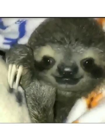 「おはよう」12/14(金) 07:28   早坂 りみの写メ・風俗動画