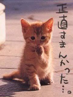 「本当ごめんなさい??♀?」12/15(土) 20:10   PS学園はる「はる」の写メ・風俗動画