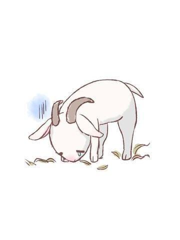 「【アニマル診断】今日の運勢ランキング」12/16(日) 16:15 | ゆりあの写メ・風俗動画
