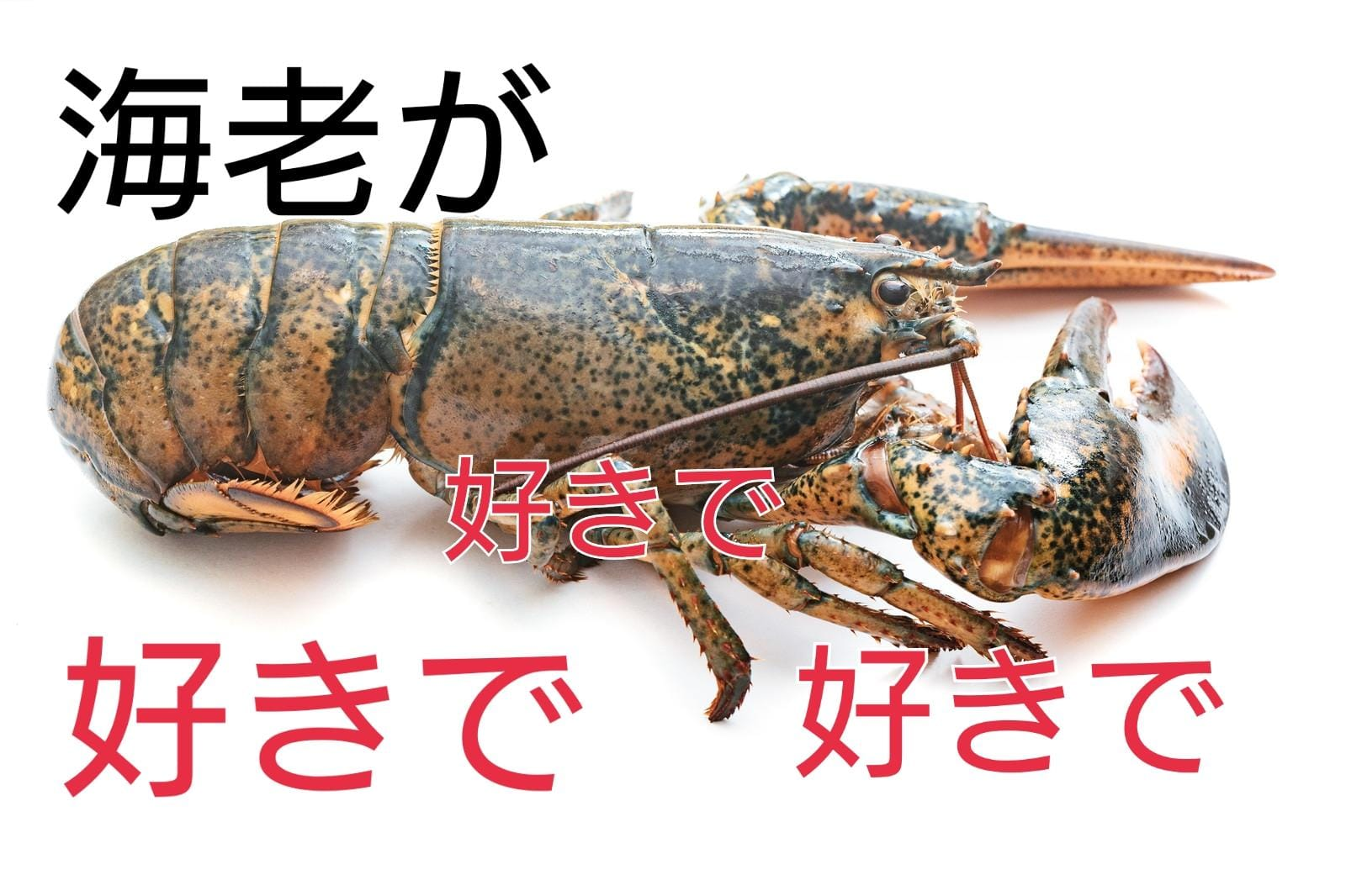 まこ「☆★☆好きで好きで震える恋ような★☆★」12/18(火) 12:54 | まこの写メ・風俗動画
