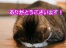 「お礼です」12/18(火) 23:16   まおの写メ・風俗動画