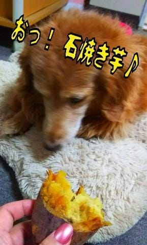 吉永あんな「[ペット]:フォトギャラリー」12/19(水) 18:18 | 吉永あんなの写メ・風俗動画