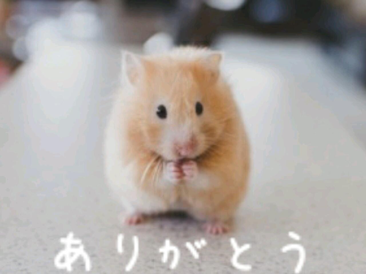 「お礼♪」01/07(月) 21:52 | 月山杏奈の写メ・風俗動画