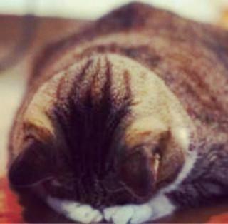 「お休みします」01/11(金) 13:08 | 月山杏奈の写メ・風俗動画