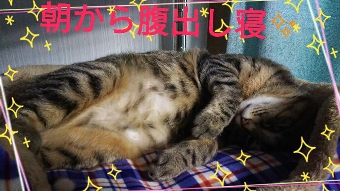 るい「うるさい朝(;・ω・)」01/16(水) 11:50 | るいの写メ・風俗動画