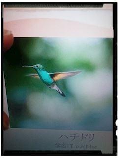 「花の蜜を主食とする最も小さい種類の鳥」01/17(木) 21:54 | いずみの写メ・風俗動画