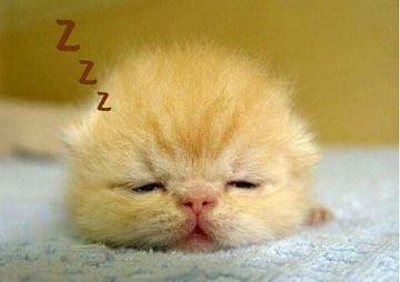 りこ「おやすみなさい」01/17(木) 22:56 | りこの写メ・風俗動画