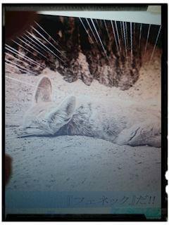 「乾燥と寒暖差の激しい砂漠に生息する世界最小のキツネ」01/18(金) 13:29 | いずみの写メ・風俗動画