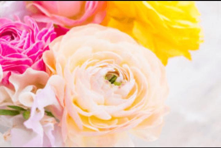 「ありさです」01/21(月) 17:37 | ありさの写メ・風俗動画