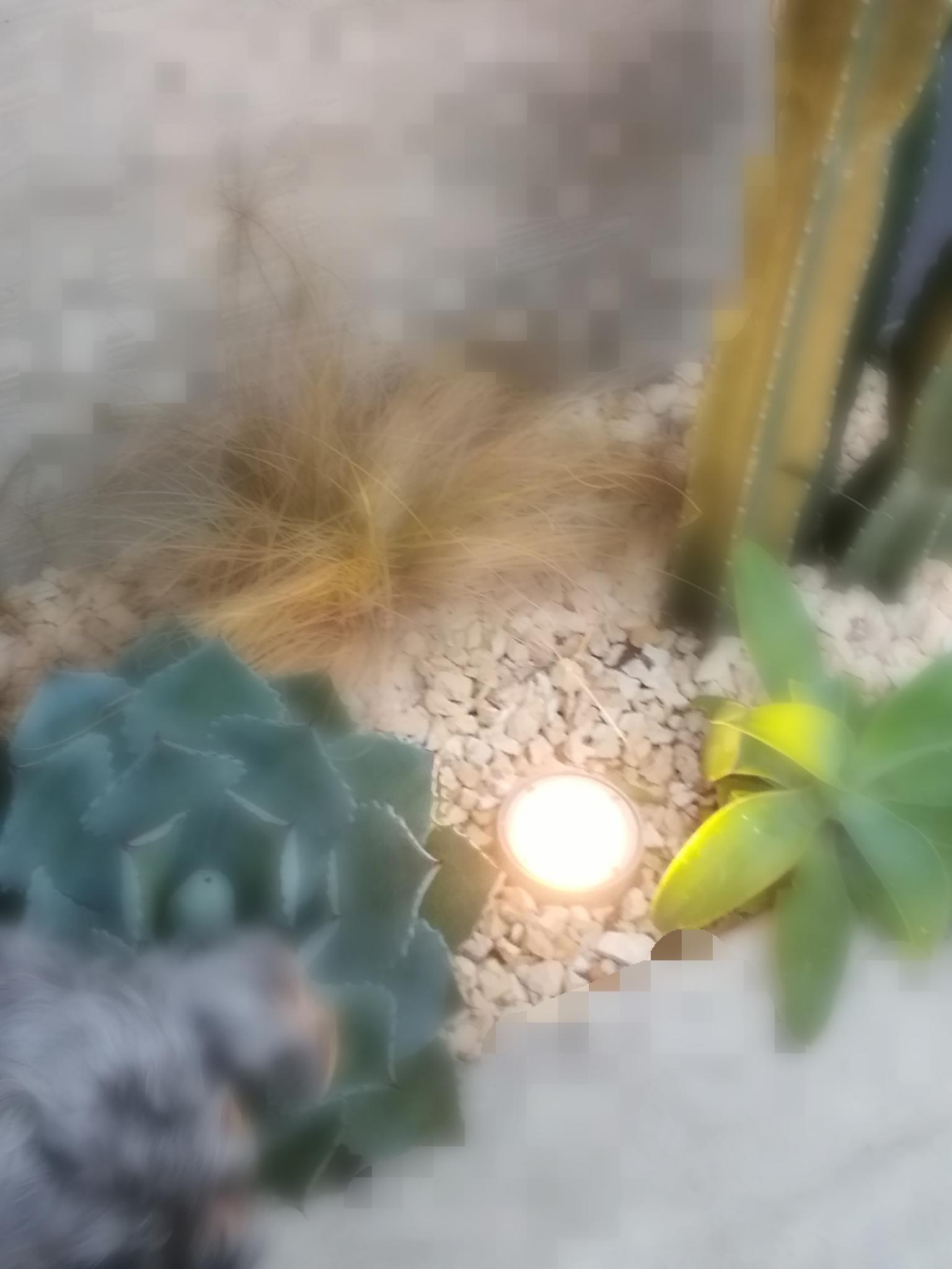 「月光浴」01/22(火) 08:38 | りりいの写メ・風俗動画