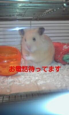 「こんにちは」01/22(火) 13:02   藤堂の写メ・風俗動画