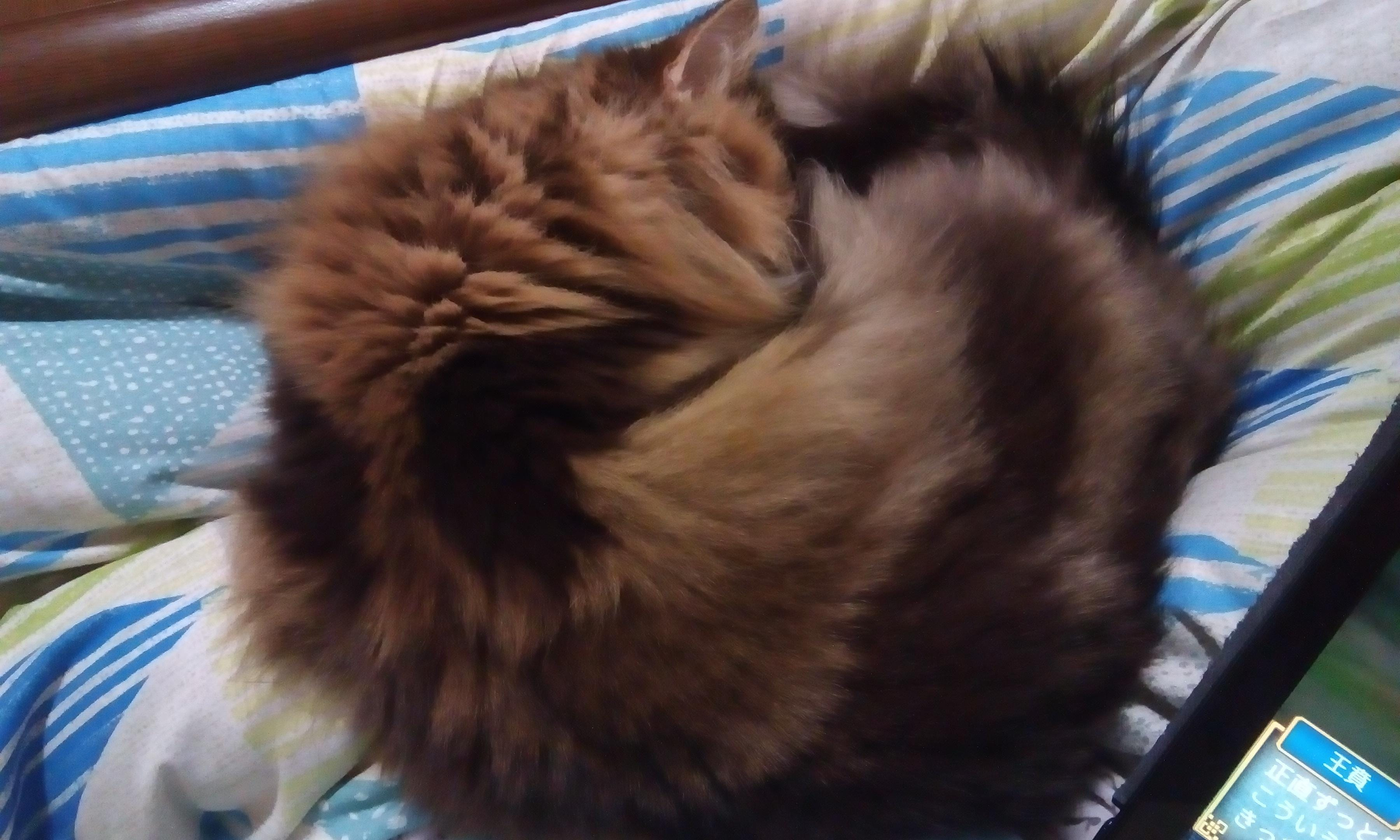 むつき「猫はお膝で丸くなる(ΦωΦ)」02/16(土) 07:14 | むつきの写メ・風俗動画