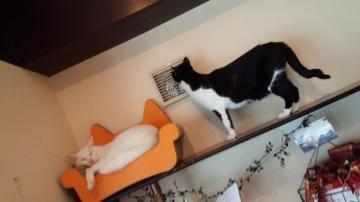 「猫カフェ」02/16(土) 13:20   香-かおりの写メ・風俗動画