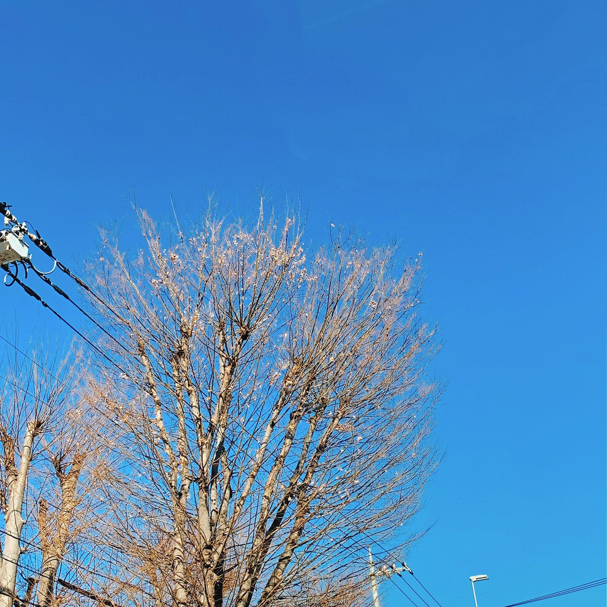「おはようございます(^-^)」02/18(月) 13:04 | まきの写メ・風俗動画