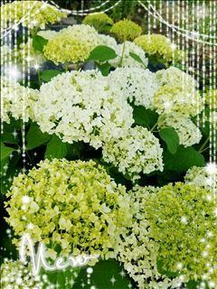 「おはようございます。」06/16(木) 18:58 | 秋吉の写メ・風俗動画