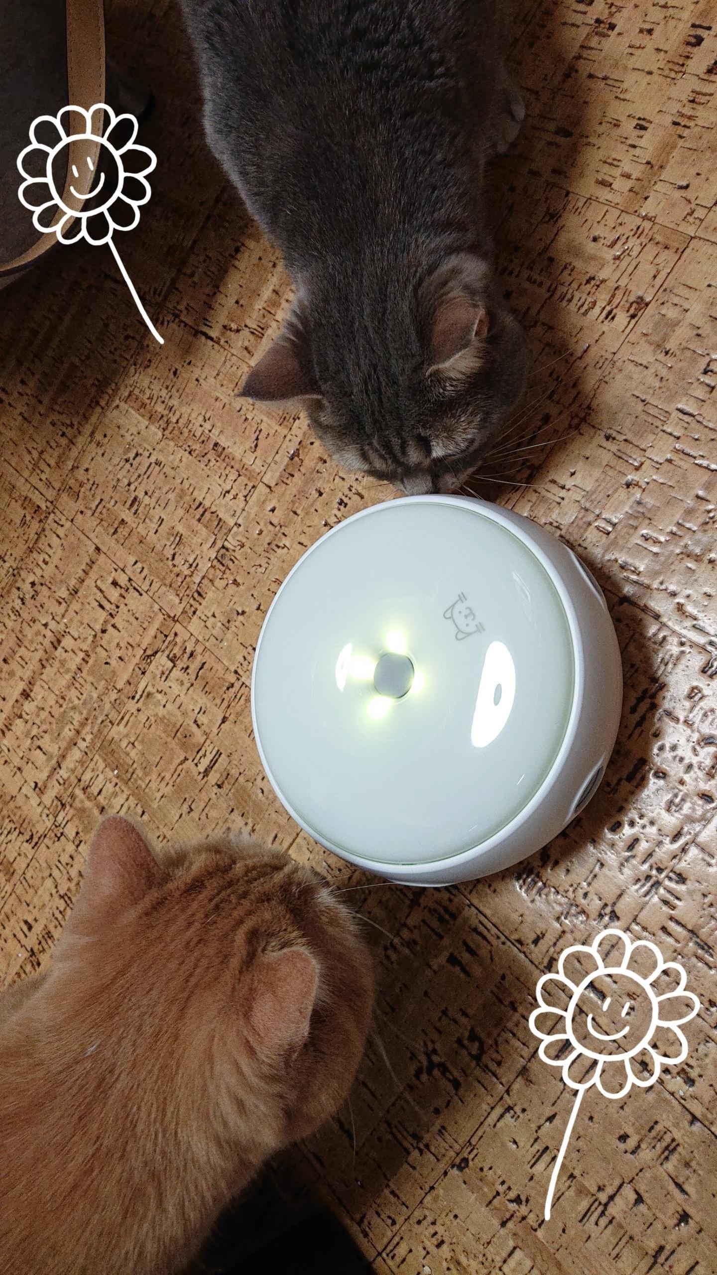 「おもちゃ(爆)買いww」02/21日(木) 17:51   ゆいの写メ・風俗動画