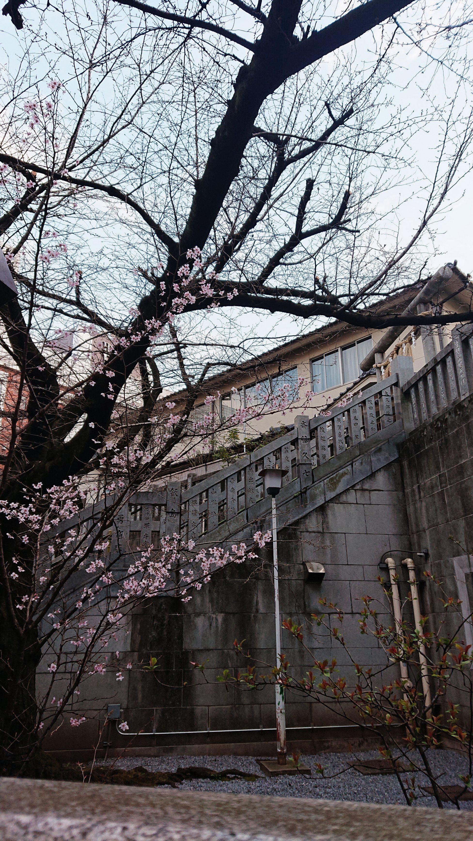 「ママのお友達の元有名単体AV女優さんが」03/19(火) 00:44 | 薫ママの写メ・風俗動画