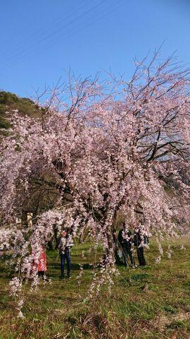 西崎智恵「おはようございます(*^^*)」04/12(水) 08:56 | 西崎智恵の写メ・風俗動画