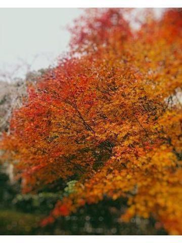 「紅葉」03/21(木) 22:18 | 相川の写メ・風俗動画