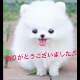 「お誘い頂いてありがとうございました^_^」03/22(金) 01:23 | すみれの写メ・風俗動画