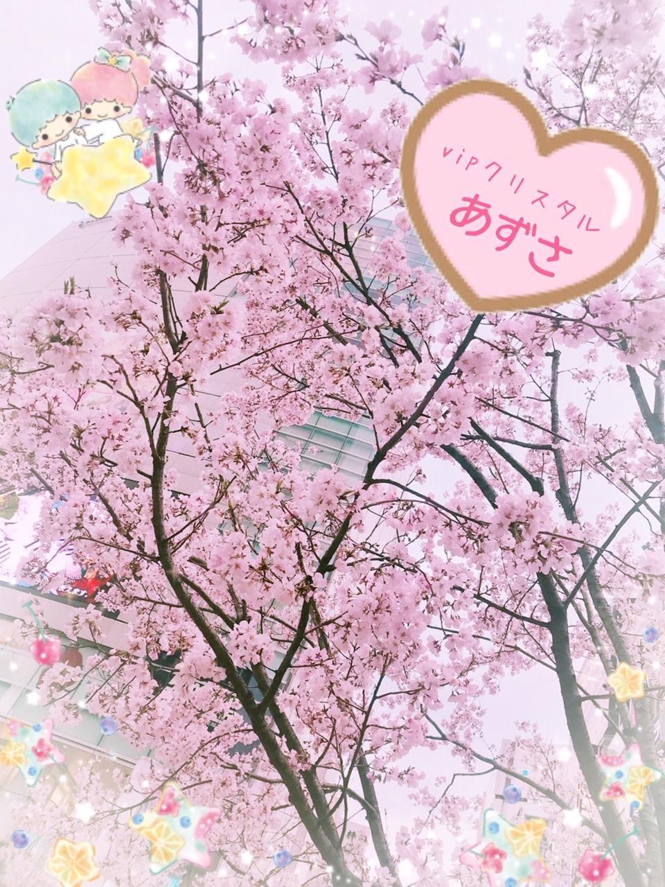 「咲いてた!」03/22日(金) 21:35 | あずさの写メ・風俗動画