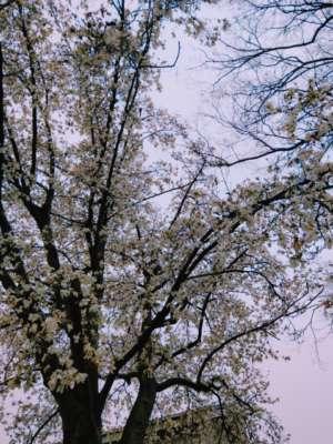 「ホワイトマグノリア」03/23(土) 14:59 | みさきの写メ・風俗動画