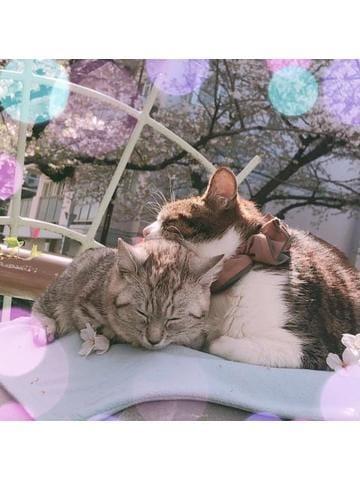「迫り来るおっぱいちゃん」04/10(水) 01:34   みやびの写メ・風俗動画