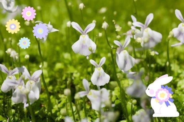 広田「やだ(´-ω-`)カワイイ❣️」04/16(火) 11:09   広田の写メ・風俗動画