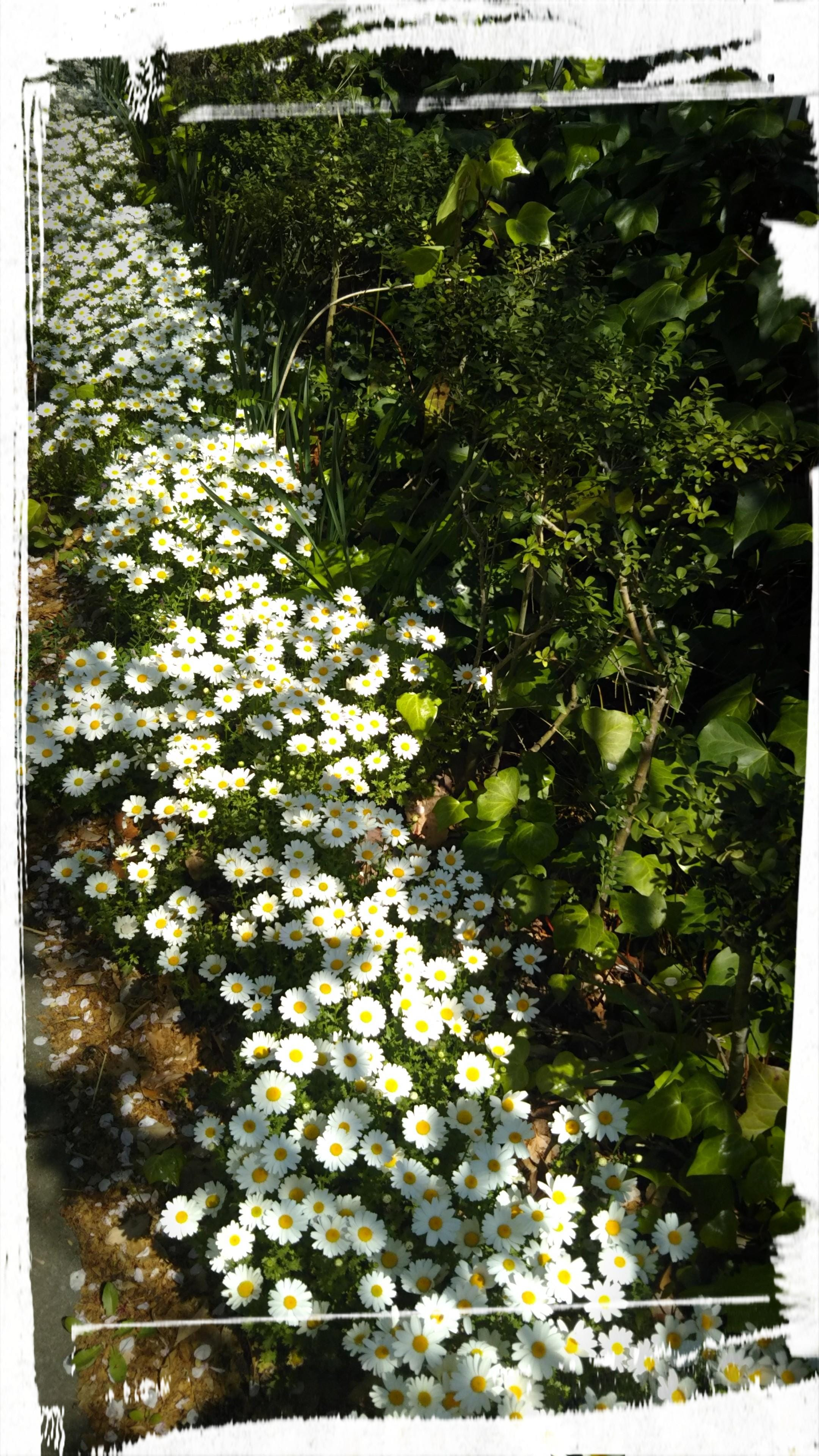 石田「4月半ば❗️」04/17(水) 09:51   石田の写メ・風俗動画