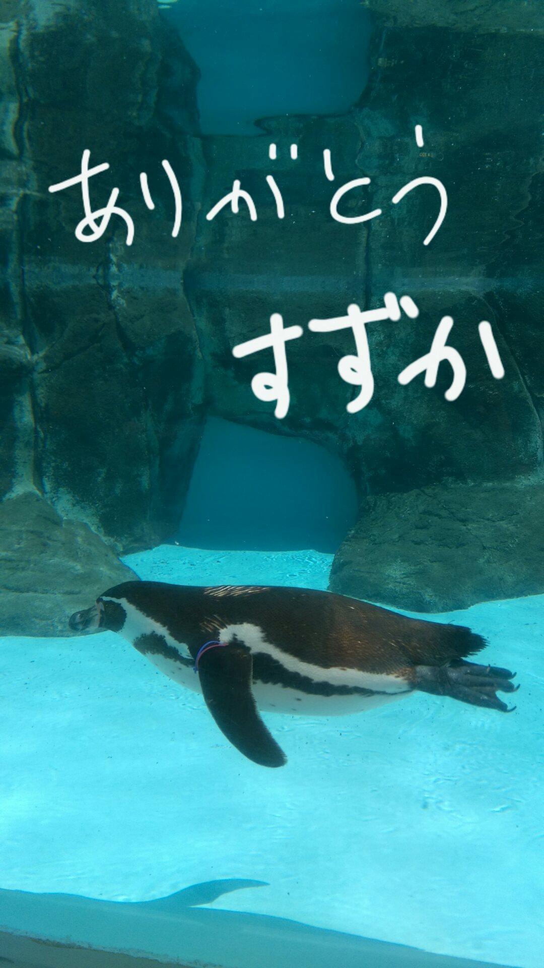 「鈴華です!(⌒_⌒)」04/28(金) 23:34 | 鈴華(すずか)の写メ・風俗動画
