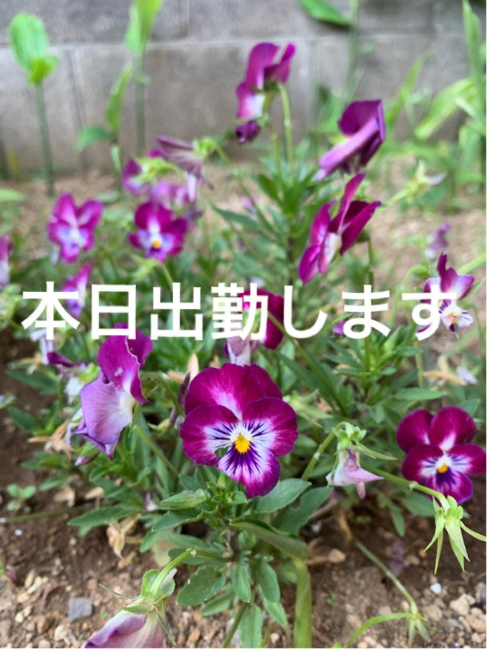 星谷るか「☆星谷☆」06/12(水) 01:35 | 星谷るかの写メ・風俗動画