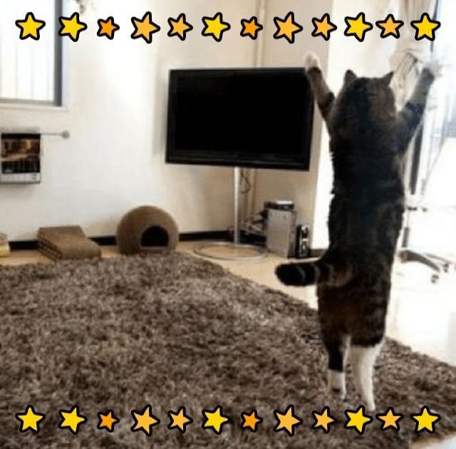 橋本ありさ「暑くなりそう。」06/13(木) 10:02 | 橋本ありさの写メ・風俗動画