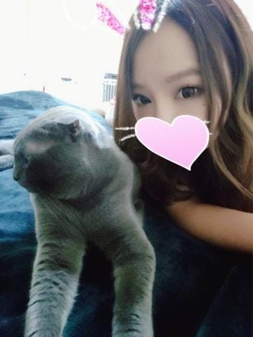 のあ「愛猫ちゃんと...??」06/17(月) 18:58   のあの写メ・風俗動画