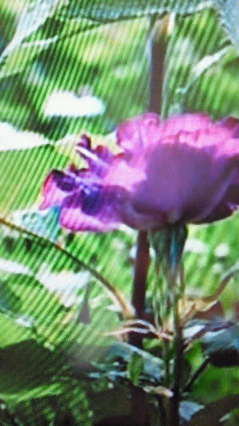「出勤します(^O^)」06/19(水) 17:16   ホノカの写メ・風俗動画