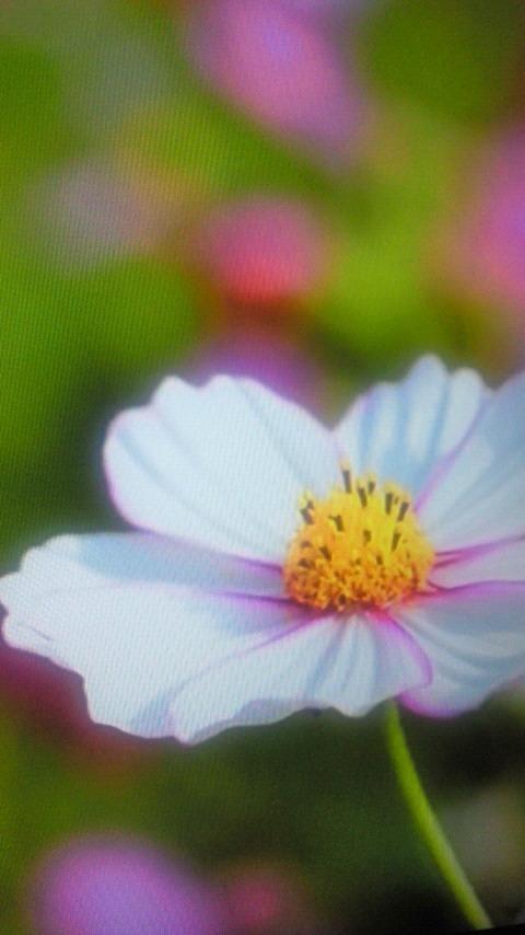 「こんにちはヾ(=^ ▽^=)ノ」06/20(木) 18:08   ホノカの写メ・風俗動画