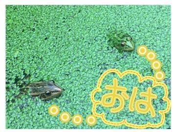 みそら【金妻VIP】「[お題]from:夜シンゴ♡さま」07/24(水) 06:00   みそら【金妻VIP】の写メ・風俗動画
