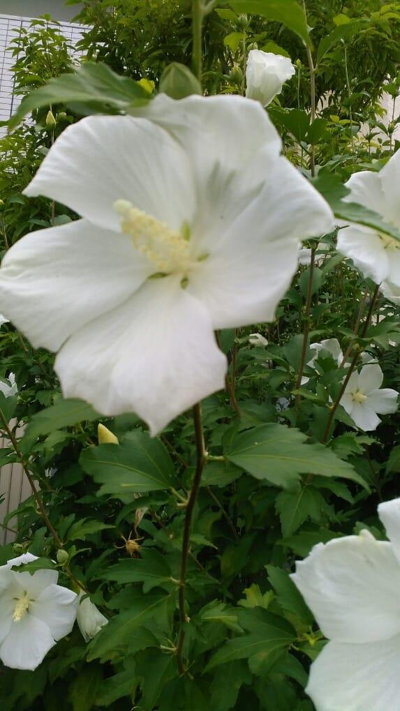 「おはようございます(*^-^*)」07/08(土) 10:17 | ゆきこの写メ・風俗動画