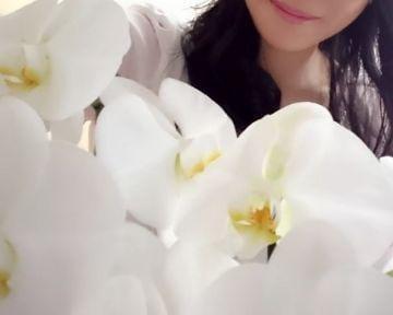 「ご予約ありがとうございます」11/13(水) 17:48 | 小幡 直美の写メ・風俗動画