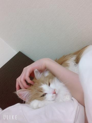 ゆりか★SSS級美女「こんばんは」12/10(火) 19:17 | ゆりか★SSS級美女の写メ・風俗動画
